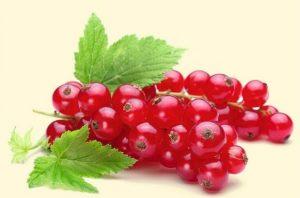 drobné ovocie - ríbezľa